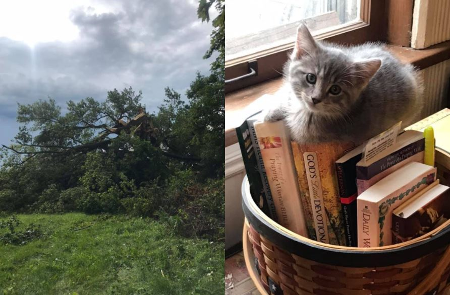 Kittens and broken trees