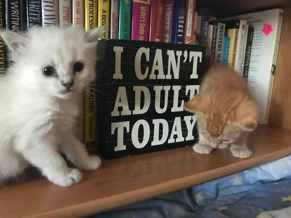 kitties cant adult